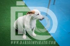 www.darioimparato.com - torneo pallavolo web-308