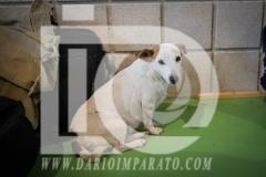 www.darioimparato.com - torneo pallavolo web-487