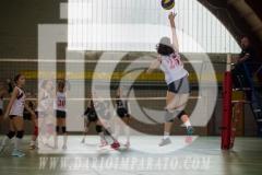 www.darioimparato.com - torneo pallavolo web-529